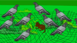 the wise pigeons and the hunter story